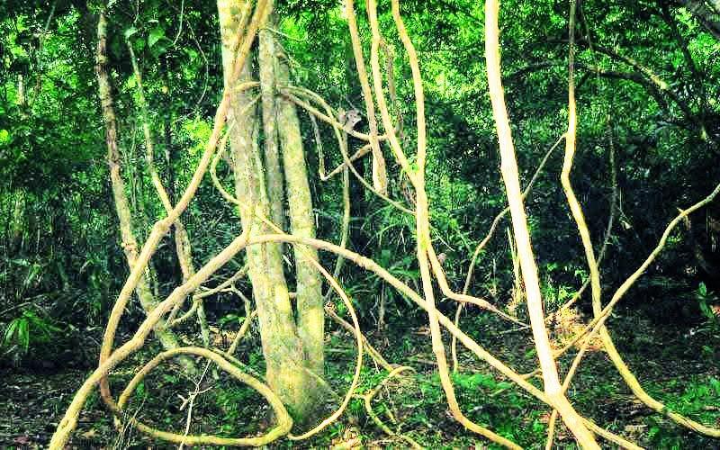 La primavera y la madera – medicina china